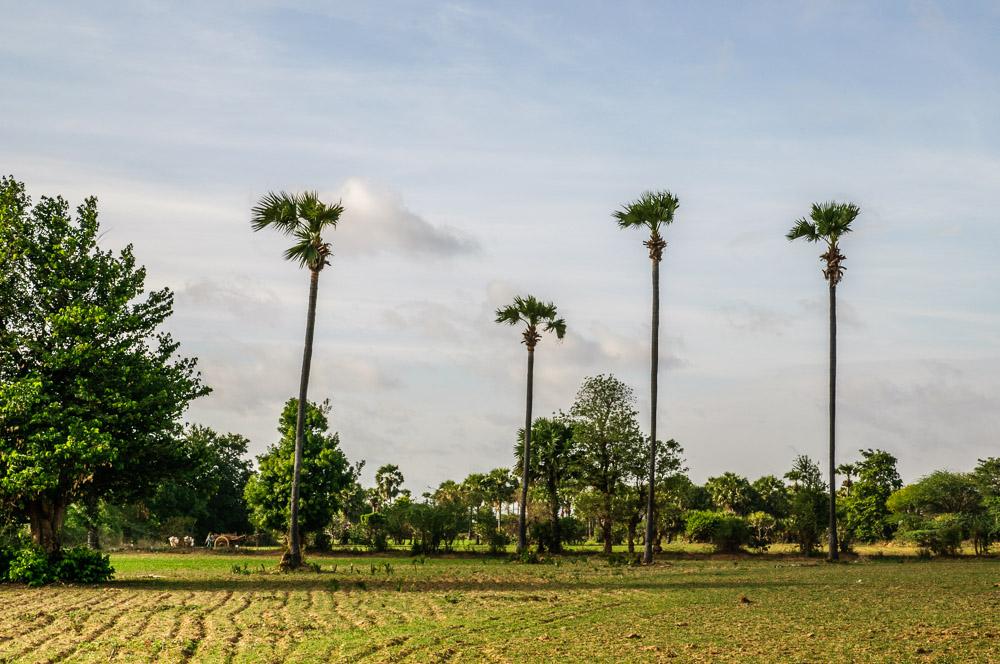 paysage sur une petite route de Bagan