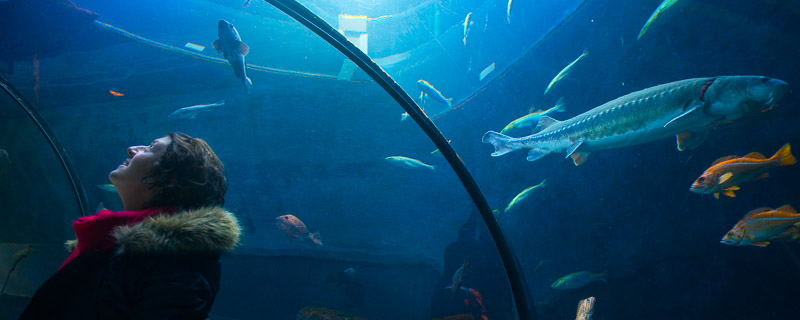 l'aquarium de la Ville de Québec