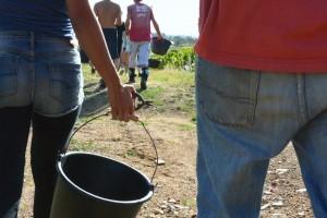 les outils indispensables dans les vignes