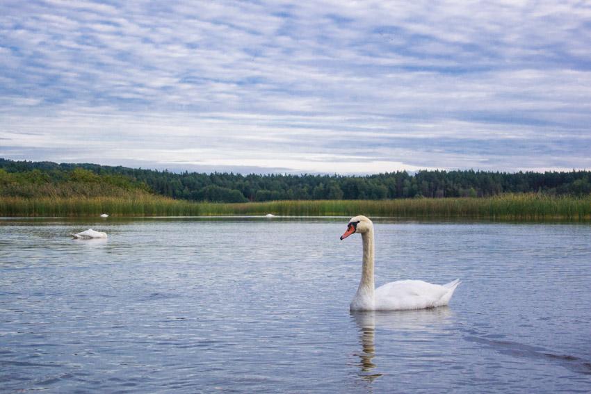 Week-end en Pologne, le long de la Green Velo - Echo Lake