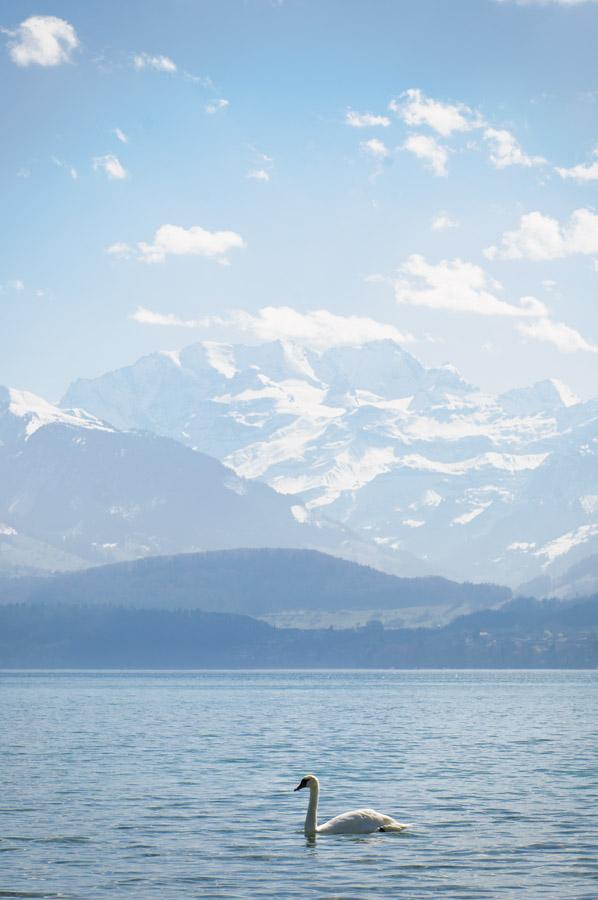 Lac de Thoune © Michel Dvorak / www.au-tournant.org