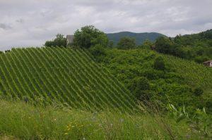 les vignes de Jastrebarsko